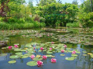 モネの絵画をモチーフにした睡蓮の庭(スイレン 5月下旬~9月中旬)