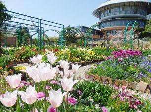 花の庭に咲き誇る春の花々