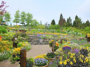 香りの庭は、南フランスプロヴァンスの丘陵をイメージした庭園