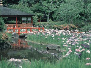 初夏にはおよそ200株の花菖蒲が花を咲かせる