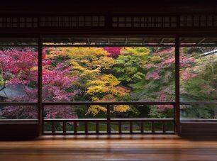 秋深まる瑠璃の庭
