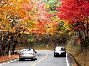 秋にはもみじのトンネルが登場