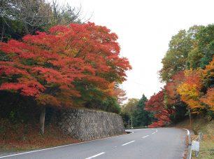 秋のドライブウェイ(田の谷ゲートより700m付近)