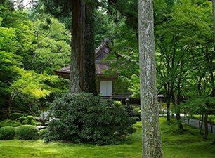 国宝・阿弥陀三尊像を安置する往生極楽院