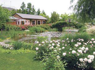 耐寒性・熱帯性の色彩豊かな睡蓮が咲く「スイレンの池」。