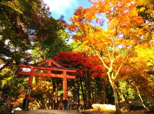 紅葉の見どころは山王鳥居付近。見頃は11月中旬