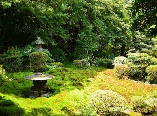 苔の生み出す様々なグリーンが美しい