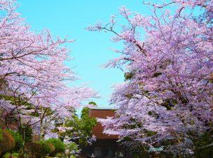 桜の名所として全国的に有名