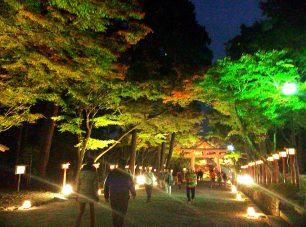 「もみじ祭」では毎年ライトアップも開催