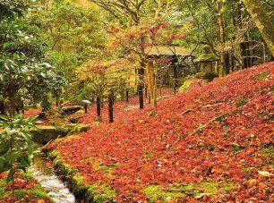 晩秋の散り紅葉