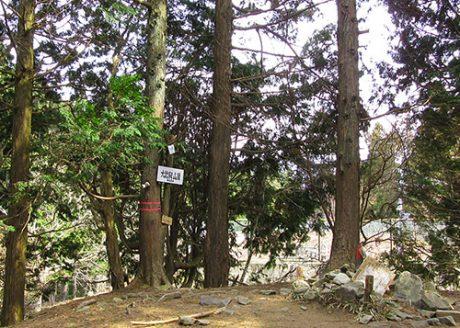 《ハイキング ①》比叡山頂から緑深い杉木立を抜けて延暦寺へ
