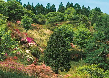 《ハイキング ②》足湯でリフレッシュ! 絶景と季節の草花を楽しみながら歩く